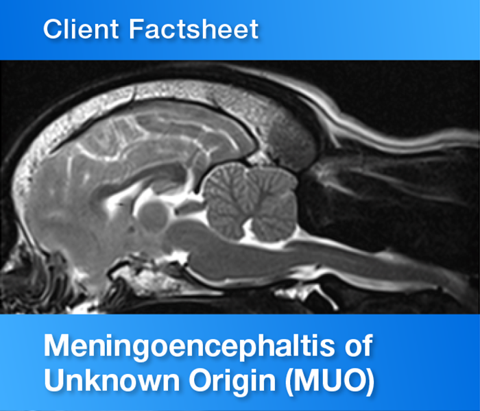 Client Factsheet Meningoencephaltis of Unknown Origin